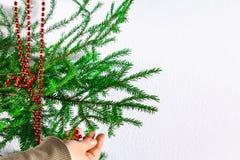 Muchacha que cuelga gotas rojas del Año Nuevo en un árbol de navidad en un fondo blanco Fotos de archivo libres de regalías