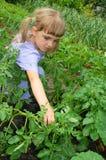 Muchacha que cultiva un huerto Foto de archivo