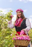 Muchacha que escoge rosas rosadas búlgaras en un jardín fotos de archivo