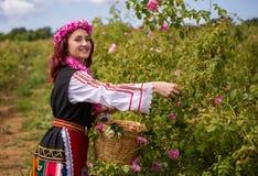 Muchacha que escoge rosas rosadas búlgaras en un jardín fotografía de archivo libre de regalías
