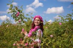 Muchacha que escoge rosas rosadas búlgaras en un jardín foto de archivo