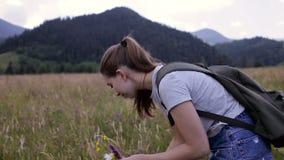Muchacha que escoge una flor en un prado de la montaña almacen de metraje de vídeo