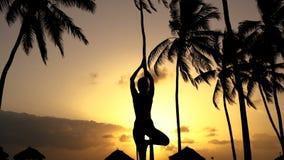 Muchacha que estira yoga por la mañana en las palmeras en el amanecer almacen de video