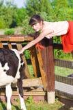 Muchacha que frota ligeramente la vaca en granja Foto de archivo