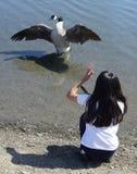 Muchacha que habla con un ganso Foto de archivo libre de regalías