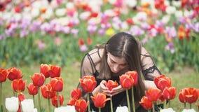 Muchacha que huele tulipanes rojos almacen de video