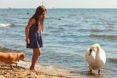 Muchacha que juega con el cisne adulto fotos de archivo
