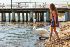 Muchacha que juega con el cisne adulto imágenes de archivo libres de regalías