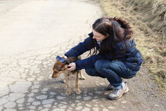 Muchacha que juega con el perro Fotografía de archivo
