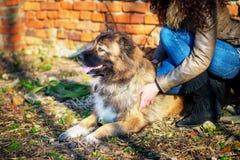 Muchacha que juega con el perro de pastor caucásico, otoño Imágenes de archivo libres de regalías