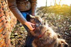 Muchacha que juega con el perro de pastor caucásico, otoño Imagen de archivo libre de regalías