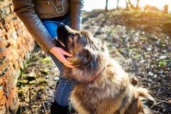 Muchacha que juega con el perro de pastor caucásico, otoño Fotos de archivo