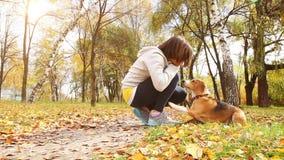Muchacha que juega con el perro de perrito del beagle en parque otoñal almacen de metraje de vídeo