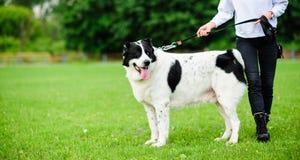 Muchacha que juega con el perro divertido Foto de archivo libre de regalías