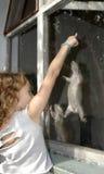 Muchacha que juega con las marmotas Fotografía de archivo libre de regalías
