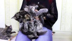 Muchacha que juega con los gatitos almacen de video