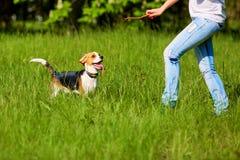 Muchacha que juega con un perro en el parque En las manos del palillo Imagenes de archivo