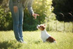Muchacha que juega con un perro Jack Russell Terrier en naturaleza Verano fotos de archivo