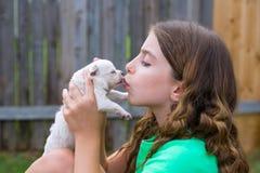 Muchacha que juega el perro casero de la chihuahua del perrito que se besa Foto de archivo