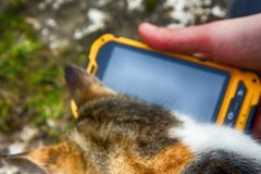 Muchacha que juega en la canción del smartphone para su gato querido Fotografía de archivo libre de regalías