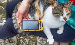 Muchacha que juega en la canción del smartphone para su gato querido Imagen de archivo libre de regalías