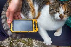 Muchacha que juega en la canción del smartphone para su gato querido Foto de archivo libre de regalías