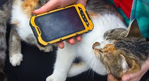 Muchacha que juega en la canción del smartphone para su gato querido Fotos de archivo