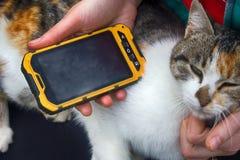 Muchacha que juega en la canción del smartphone para su gato querido Imágenes de archivo libres de regalías