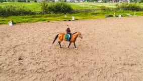 Muchacha que monta una opinión superior del caballo fotos de archivo libres de regalías