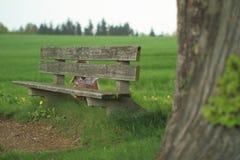 Muchacha que oculta detrás de un banco Fotos de archivo libres de regalías