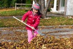 Muchacha que rastrilla las hojas Foto de archivo libre de regalías