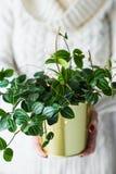 Muchacha que sostiene una planta casera en un pote del oro imagenes de archivo