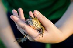 Muchacha que sostiene una rana en una mano fotos de archivo