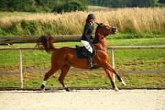 Muchacha que trota en un caballo Imagen de archivo libre de regalías