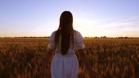 Muchacha que viaja en campo la muchacha feliz camina a través de un campo con trigo amarillo y toca los oídos del trigo con sus l almacen de video