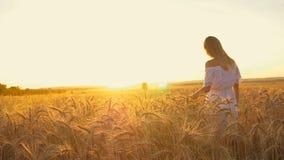 Muchacha romántica en un vestido blanco que camina en los campos de trigo de oro en el sol almacen de metraje de vídeo