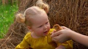 Muchacha rubia encantadora que frota ligeramente suavemente un pequeño polluelo almacen de video
