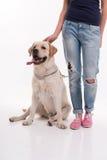 Muchacha rubia hermosa con el labrador retriever Fotografía de archivo libre de regalías