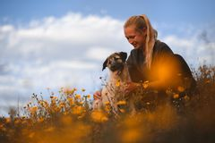 Muchacha rubia que juega con el mast?n espa?ol del perrito en un campo de flores amarillas fotografía de archivo