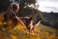 Muchacha rubia que juega con el perro de pastor alem?n en un campo de flores amarillas imagen de archivo libre de regalías