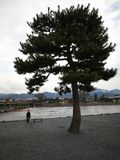 Muchacha sola con el árbol solo imagenes de archivo