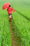 Muchacha sola que camina en la lluvia Imagen de archivo