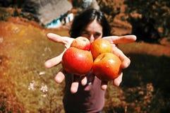 Muchacha sonriente que sostiene manzanas en su mano Imágenes de archivo libres de regalías
