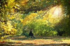 Muchacha triguena y hojas de oro Foto de archivo