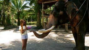Muchacha tur?stica feliz que alimenta el elefante gigante almacen de video