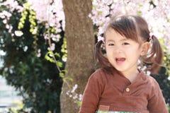 Muchacha y flores de cerezo japonesas Imagen de archivo libre de regalías