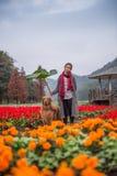 Muchacha y golden retriever en las flores Fotos de archivo