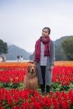 Muchacha y golden retriever en las flores Fotografía de archivo libre de regalías