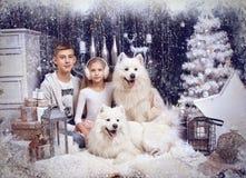 Muchacha y muchacho con el perro de dos blancos foto de archivo libre de regalías