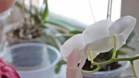 Muchacha y orquídea metrajes